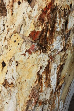 Tree trunk. Stock Photo - 9531175