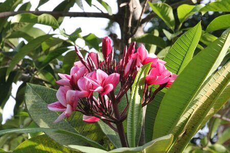 Flowers, Thailand. photo