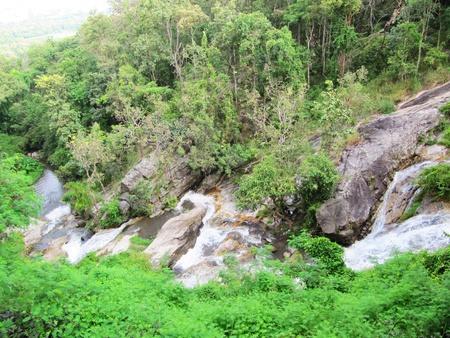 Jungle, Thailand                                     photo