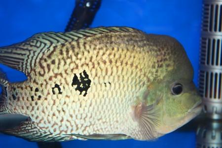 Tropical fish on display at Future park shopping center in Bangkok, Thailand  Stock Photo - 14434902