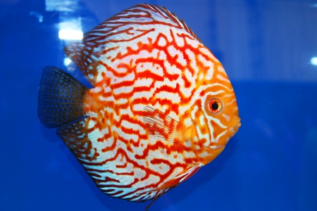 Tropical fish on display at Future park shopping center in Bangkok, Thailand  photo