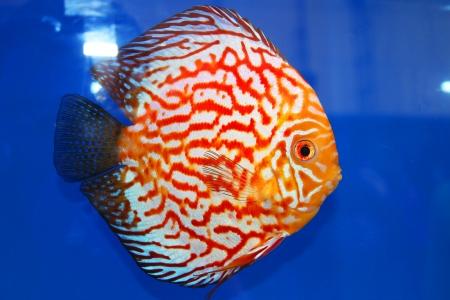 Tropical fish on display at Future park shopping center in Bangkok, Thailand  photo