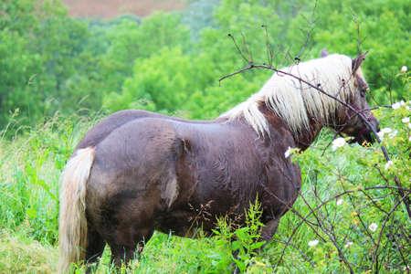 Horse in Geneva, Switzerland Stock Photo - 14683600