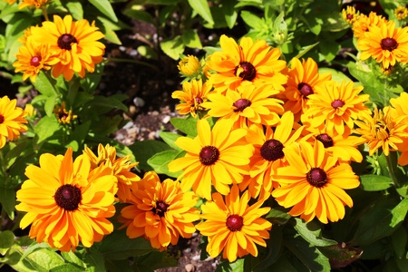 Marigolds in France Stock Photo - 14615853