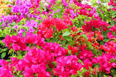 Flowers in Thailand  photo
