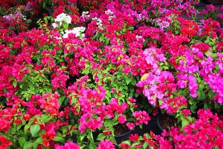 sidewalk sale: Flowers for sale in Bangkok, Thailand