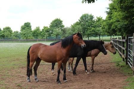 paddock: Horses in Paddock, England