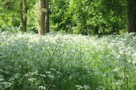 Deciduous Woodland, England