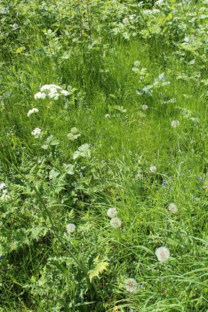 undergrowth: Woodland Undergrowth, England