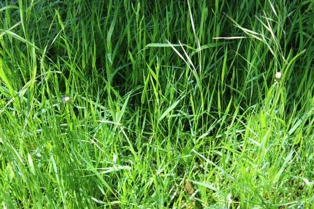 dappled: Woodland Grass, England
