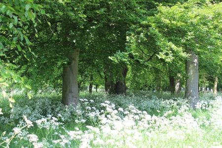 deciduous woodland: Deciduous Woodland, England