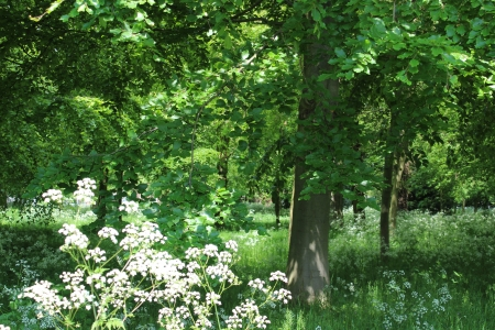 dappled: Deciduous Woodland, England