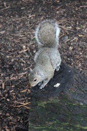 stash: Grey Squirrel, Yorkshire, England