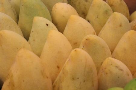Display of Mangoes, Thailand Stock Photo - 23697726