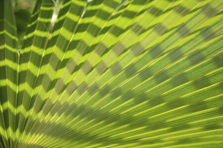 splayed: Spiky Tropical Leaf, Cyprus. Stock Photo