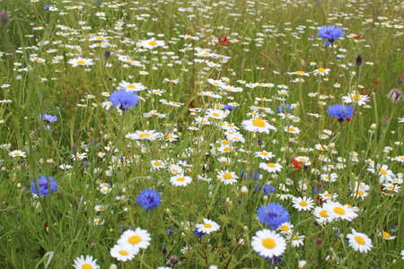 grass verge: Wild Flowers in Meadow in Spring England. Stock Photo