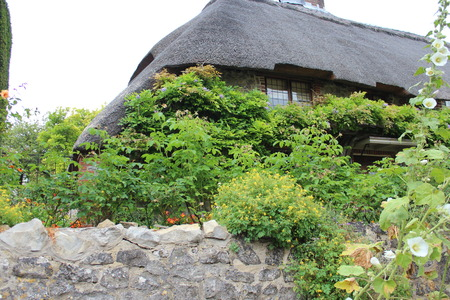 hollyhocks: Thatched Cottage in Rural England in Summer