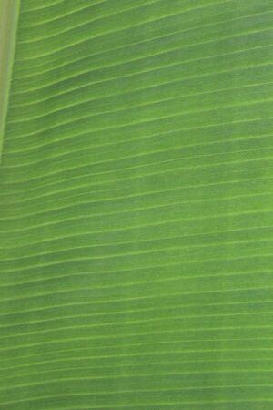 rampant: Jungle Foliage in Tropical Environment.