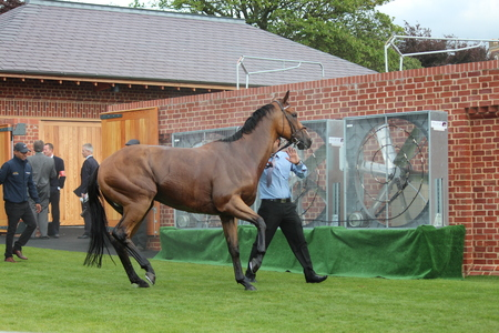 showground: acehorses After the Race Being Led to Stables.