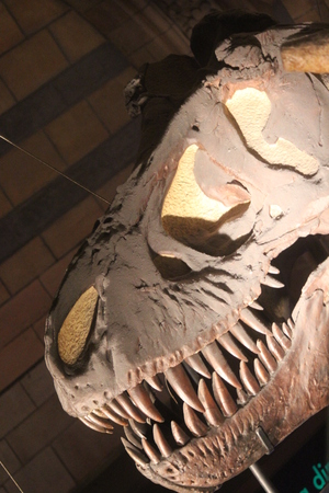 eye socket: Tyrannosaurus Smile With Teeth.