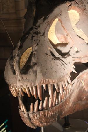eye socket: Tyrannosaurus Smile With Teeth.