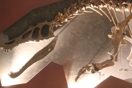 eye socket: Dinosaur Skeleton in 2D With Highlighting. Stock Photo