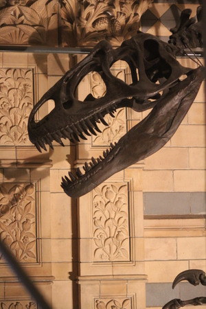 eye socket: Dinosaur Smile With Shadows and Patterns. Stock Photo