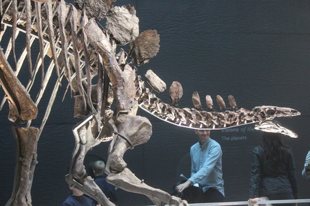 eye socket: Skeleton of Stegasaurus Dinosaur. Editorial
