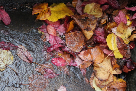 browns: Autumn Leaves in Reds, Golds and Browns.