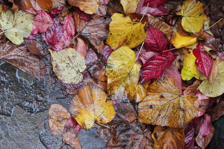 sodden: Autumn Leaves in Reds, Golds and Browns.