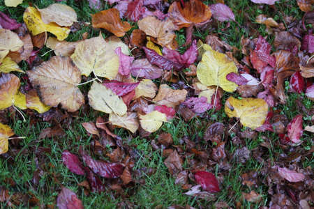 reds: Autumn Leaves in Reds, Golds and Browns.