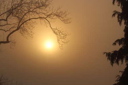irridescent: Orange Sunset Through Mist, Schwarzwald. Stock Photo