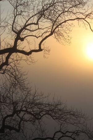 Puesta del sol anaranjada través de la niebla, Schwarzwald. Foto de archivo