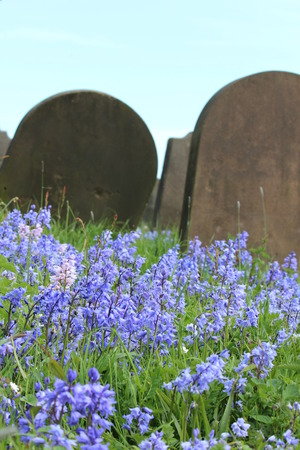 bluebells: Bluebells With Gravestones, Yorkshire.