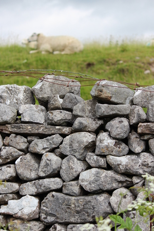 Dry Stone wall With Sheep, Yorkshire.