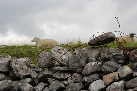 Dry Stone Wall With Sheep on Hill Top, Yorkshire.