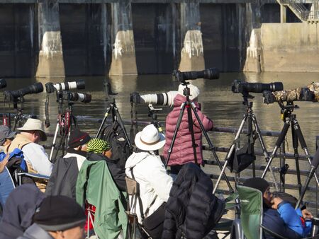 md: Conowingo, MD, USA - November 17,2016: Wildlife photographers gather at Conowingo Dam on the Susquehanna River for annual bald eagle migration.