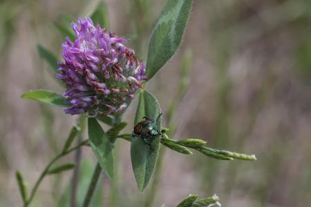 Green beetle crawling on plant leaf