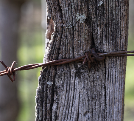 Rusted barbed wire strung on posts at edge of woods, in color. 版權商用圖片