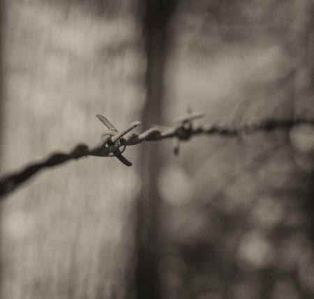 Rusted barbed wire strung on posts at edge of woods, in monochrome. 版權商用圖片