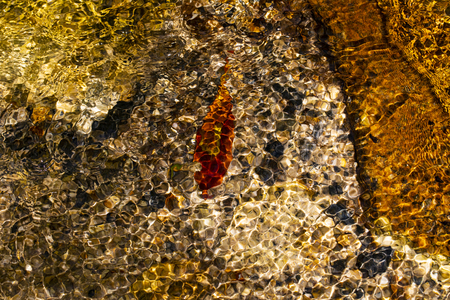 Colorful rocks and a red leaf in a creekbed at Stone Mountain, NC. 版權商用圖片