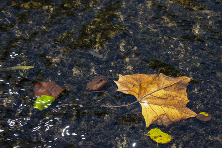 Fallen leaves and river grasses are seen beneath the rippling surface of the Roaring River in North Carolina.