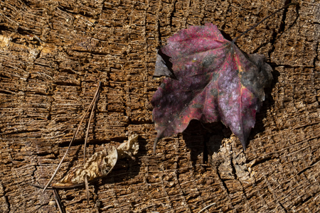 Fallen leaves and pine needle on a tree stump reflect fall colors.