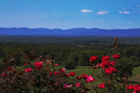 Wide-angle view of the Blue Ridge Mountains in North Carolina in late summer, including Stone Mountain. Blooming red roses provide foreground color. 版權商用圖片