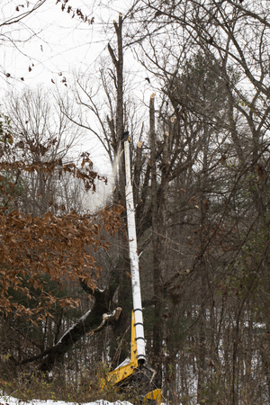 Duke Energy maintenance of way (MOW) crew trims fallen tree along transmission line after Winter Storm Diego.
