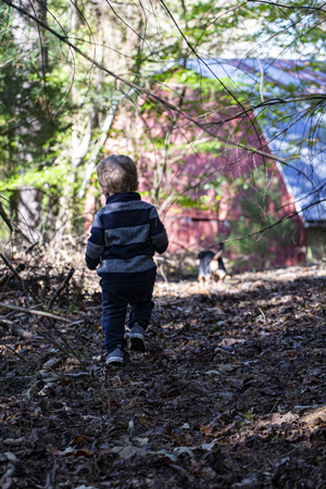Male toddler ambles through the autumn woods toward a red barn. Seen from behind. 版權商用圖片 - 126468866