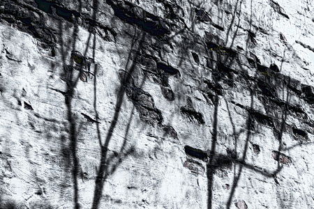 Old building wall with missing plaster and tree shadows, in monochrome.