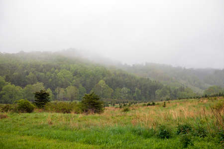 View of old Christmas tree farm on a misty day. Now part of Elk Knob State Park. 版權商用圖片 - 152292590
