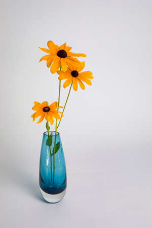 Three Black-eyed Susans in a blue glass vase against a white backdrop. 版權商用圖片 - 152292591
