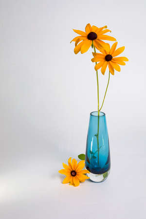 Two Black-eyed Susans in a blue glass vase with a third flower lying on the table against a white backdrop.